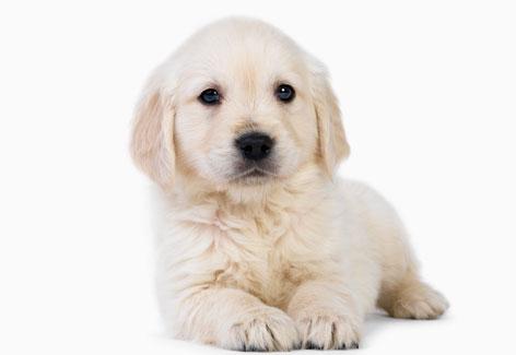 cachorro_kennel