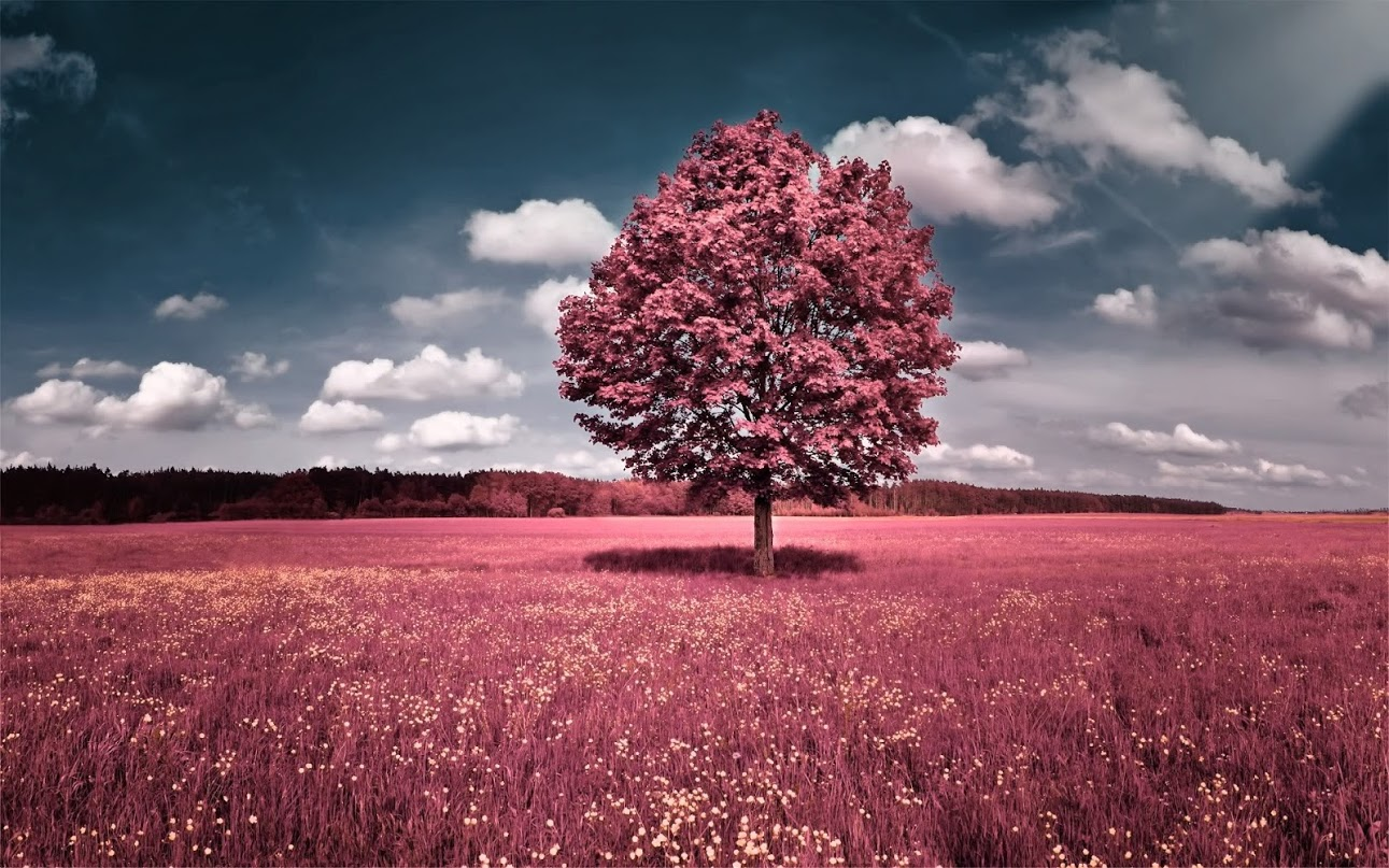 red-tree-orig