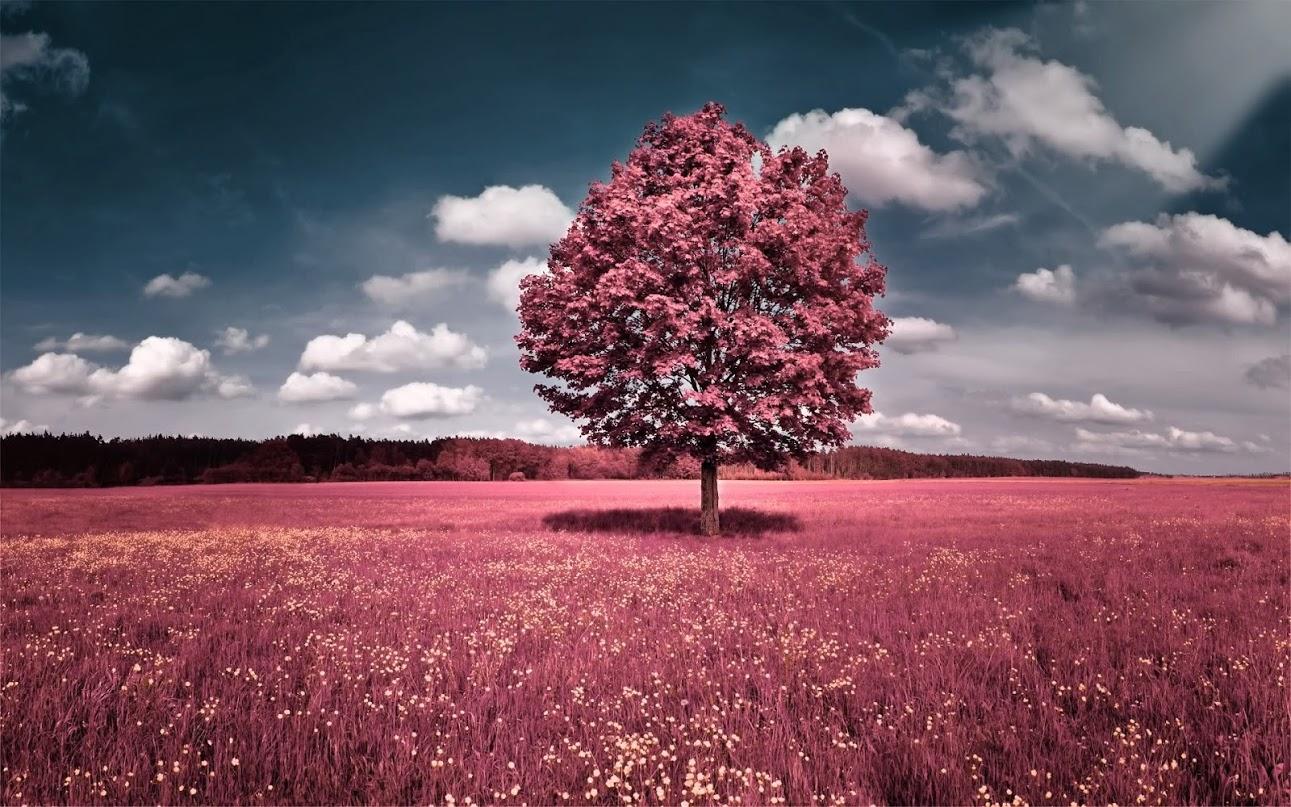 red-tree-orig